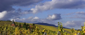 winegrowing view in Alsace, Saint-Sebastian chapel in Dambach-la-Ville