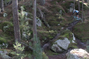 Rent MTB in forest of Fontainebleau